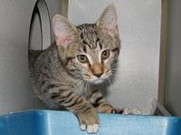 Corwin's story Corwin is one of our many adorable