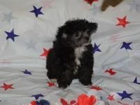 Cosmo is a very adorable, extremely little black and
