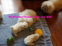 Puppies born Nov 25, 2015. Thanks for your interest. I