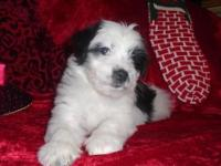 "Dancer is a BEAUTIFUL black and white ""Tall"" Coton."