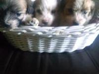 Three little boys, ready to go to their new homes in