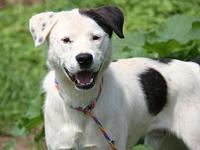 Cotter's story Cotter is a sweet 10-month old male