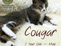 Cougar's story You can fill out an adoption application