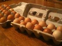 Fresh eggs from free range chickens, supplimented with