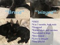 Courtesy Post - Bruce & Wayne's story These 4-5 month
