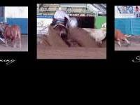 Come watch or ride with NRCHA Hall of Fame Trainer at