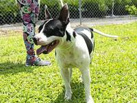Cow's story Cow is a super sweet, energetic and loving