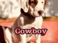 Hi! I'm Cowboy. I was born in Georgia and made my way