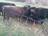 For sale cows calfs ect.. thanks Location: