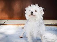 COZMO's story Meet Cozmo! This adorable little scruffy