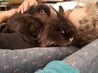 Crackers and Nosey are two Lionhead brothers. They are