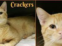 Crackers's story Crackers is so social and outgoing! He