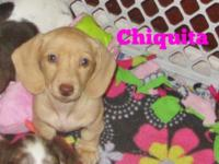 Chiquita is a stunning cream smooth with green eyes and