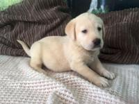 I have my Labrador boy, he is now ready to go and he's