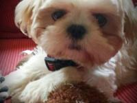 I have a male shih tzu puppy all set for a brand-new