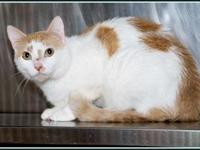 CREAMSICLE's story **BONDED WITH SWEETS $97.50 FEE