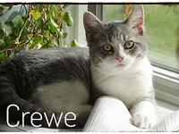 Crewe's story This is Crewe. She is smart and