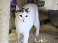 CRICKET's story Hi, I'm Cricket! I am a very