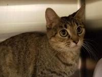 Cricket's story Cricket is a female spayed approx 1