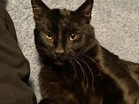 Cricket's story Are you looking for a cat that will sit