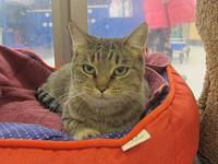 Cricket's story Cricket is a sweetheart with big,