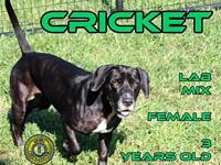 Cricket's story You can fill out an adoption