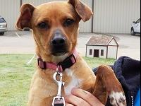 Hi my name is Cricket! I am a sweet female Terrier mix.