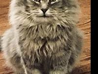 My story I so love this cat! He is so sweet and