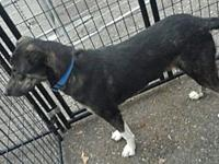 Crosby's story Crosby is the type of dog that can off