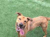 Cross's story Cross is a 2 year old male Lab/Shepherd