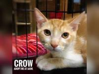 Crow's story Looking to add lots of fun and excitement