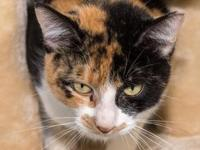 Crumpet's story Wow, Crumpet is such a beautiful calico