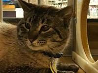 Cruz's story Cruz transferred to Purrfect Pals from a