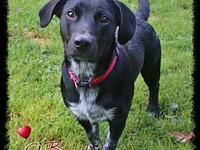 Cub's story Cub is a 11 month old male mixed breed that