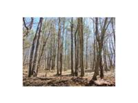 New York wooded land for sale: This 23 acre property is