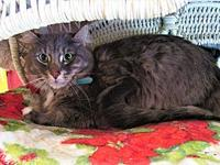 Cubby's story DOB Approximate: 12/11/12 Cubby is an