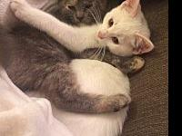 Cupcake (bonded to Muffin)'s story Cupcake and Muffin
