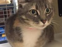 Cupcake's story Meet Cupcake! This cutie was brought to