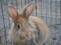 Cupcake is one of eight siblings that came to us from