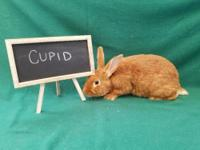 Cupid and his siblings were rescued a few days before