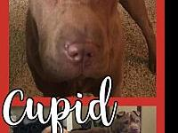 CUPID's story Please contact Brandi
