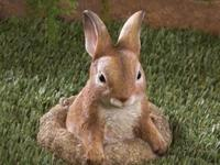This little bunny wonders about whats going on in your