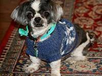 Curly's story Available to foster or adopt! Breed:Shih