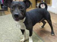 Curly's story 18-D08-031 Curly Breed: Terrier Mix Size: