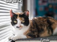 Curly Q is a 5y old American Curl calico. She is a