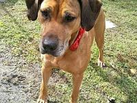 CURRY's story Curry is a beautiful Black Mouth Cur who