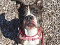 Curtis's story Looking for a Boxer type of dog or just