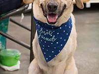 Curtis's story Curtis is a male lab mix who arrived in