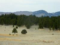 Dacotah Black Hills Acreage - Custer County, South