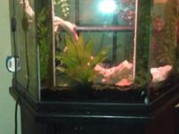 i have a custon fish tank, only one in the world i